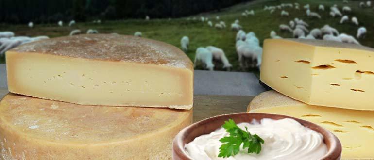 продукты из овечьего молока
