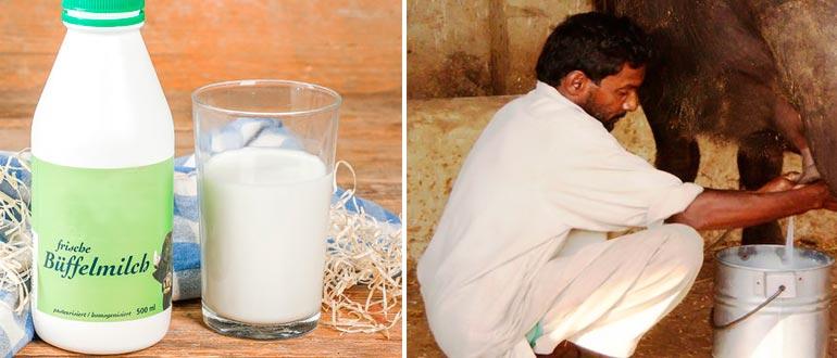 Молоко буйволицы